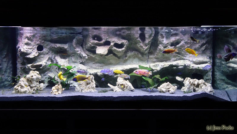 aquarium 375 liter cichliden becken. Black Bedroom Furniture Sets. Home Design Ideas