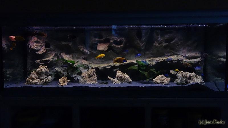 aquarium 375 liter cichliden becken. Black Bedroom Furniture Sets. Home Design Ideas